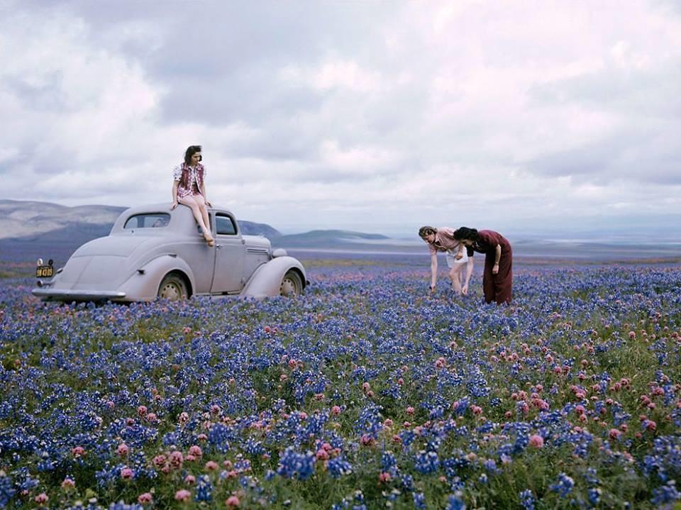 Des voyageurs cueillent des fleurs le long de la route 99, dans la vallée de San Joaquin, Californie c.1940, Photo par B. Anthony Stewart - Atomic Samba
