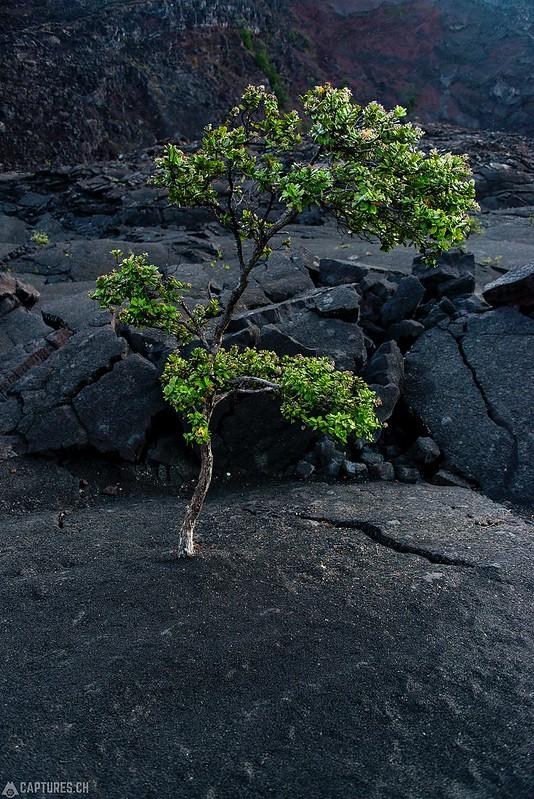 New life - Big Island