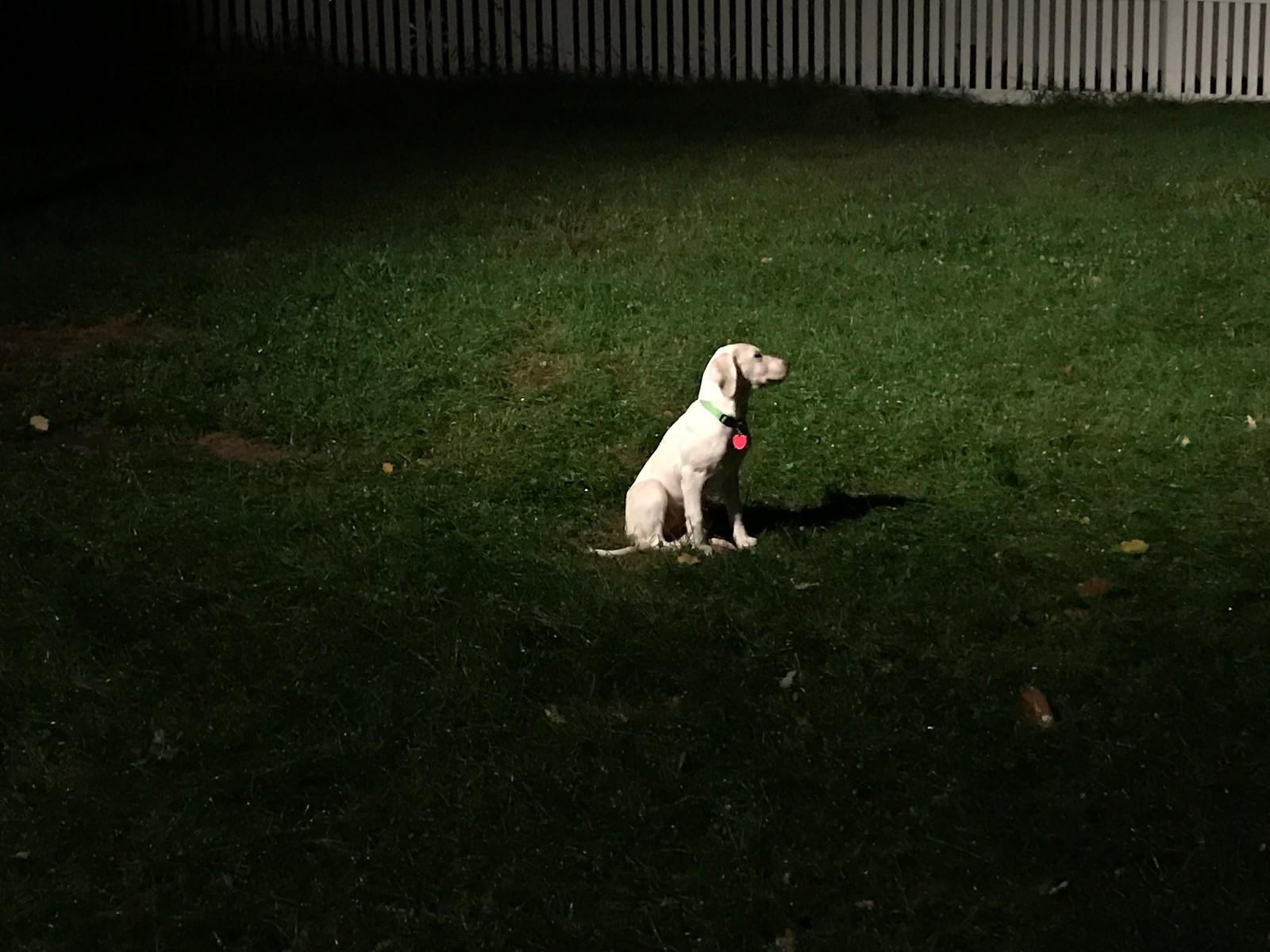 Jaz in the Spotlight