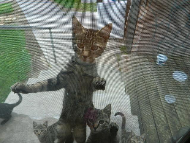 Feed me! Feed me!