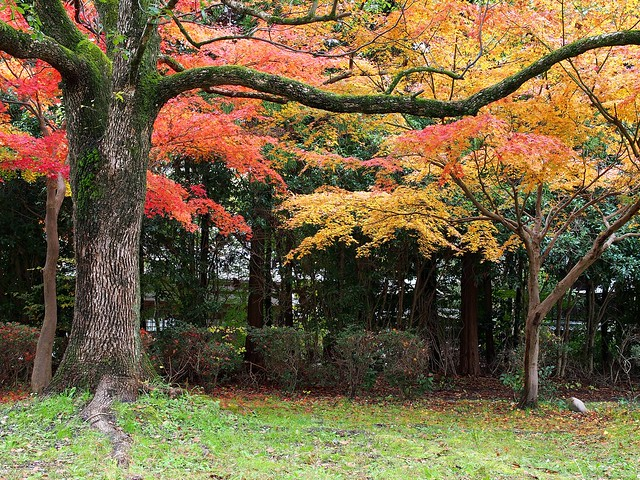 Autumn colors in Takano Park