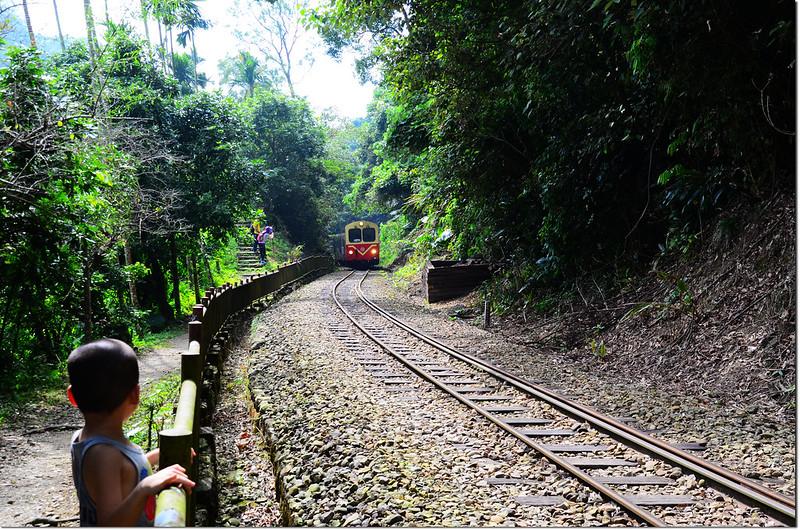 阿里山森林火車 1