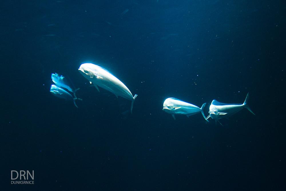 Monterey Bay Aquarium - 2016