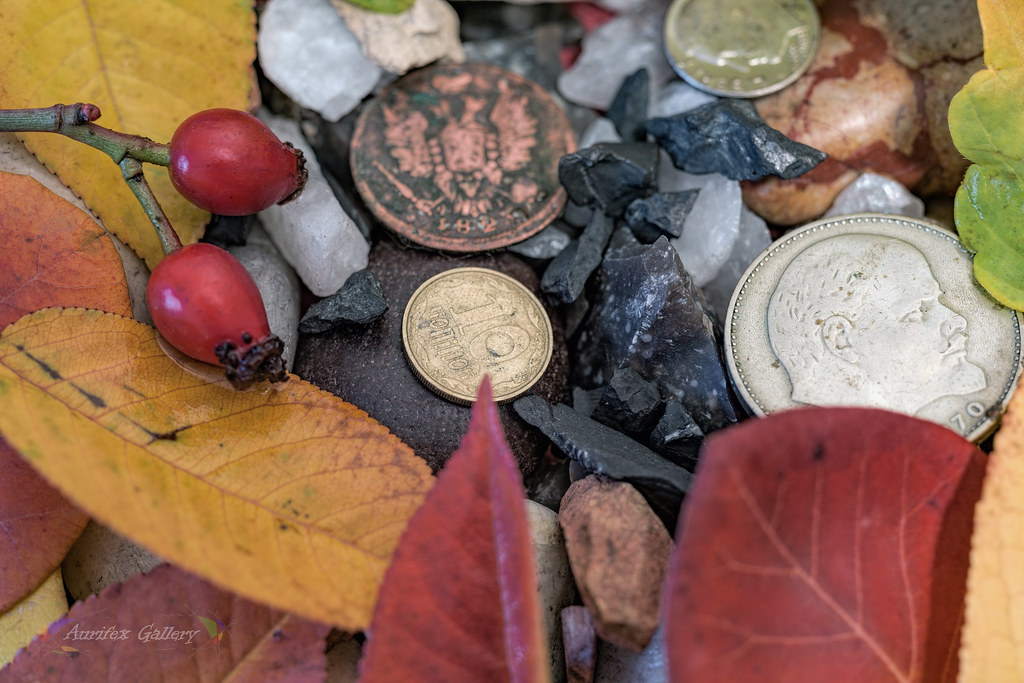 Autumn still life with old coins