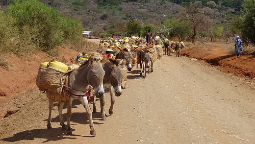 Villagers on the defensive as donkeys killed for skin trade