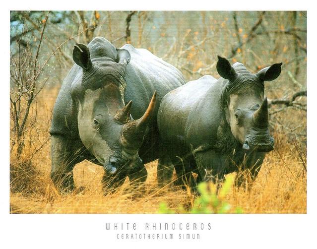 ZA_Rhinos_Front