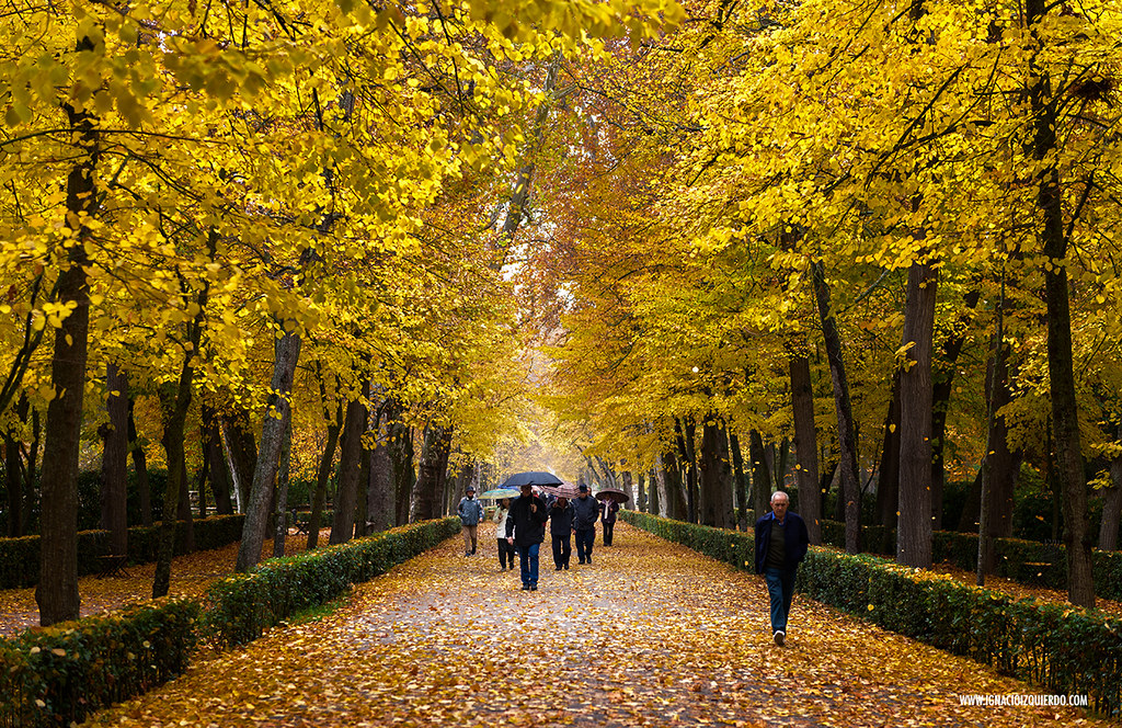 Autumn in Aranjuez 25