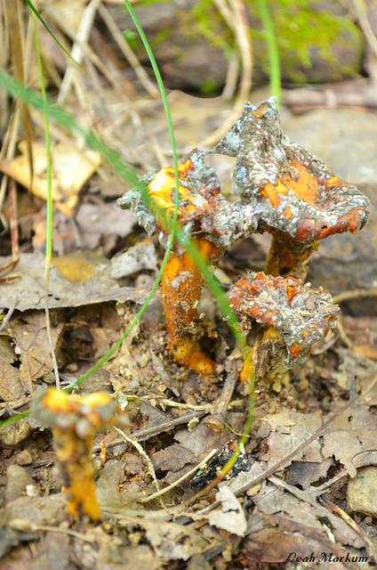Double Fungi Trouble