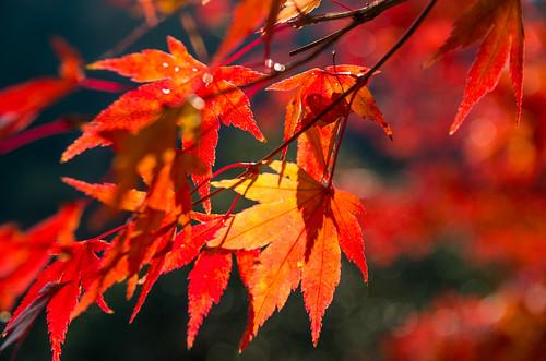 紅葉狩り - 東山公園 17
