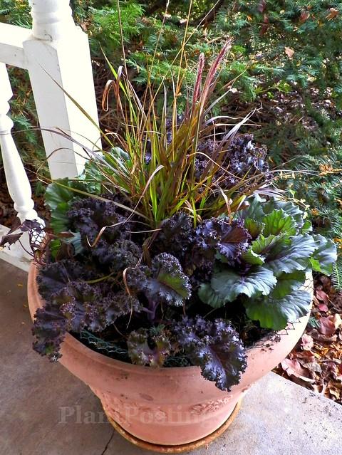 autumn pot