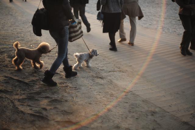 dog stroll