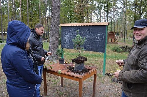 На Костопільщині вирощуютьбонсай