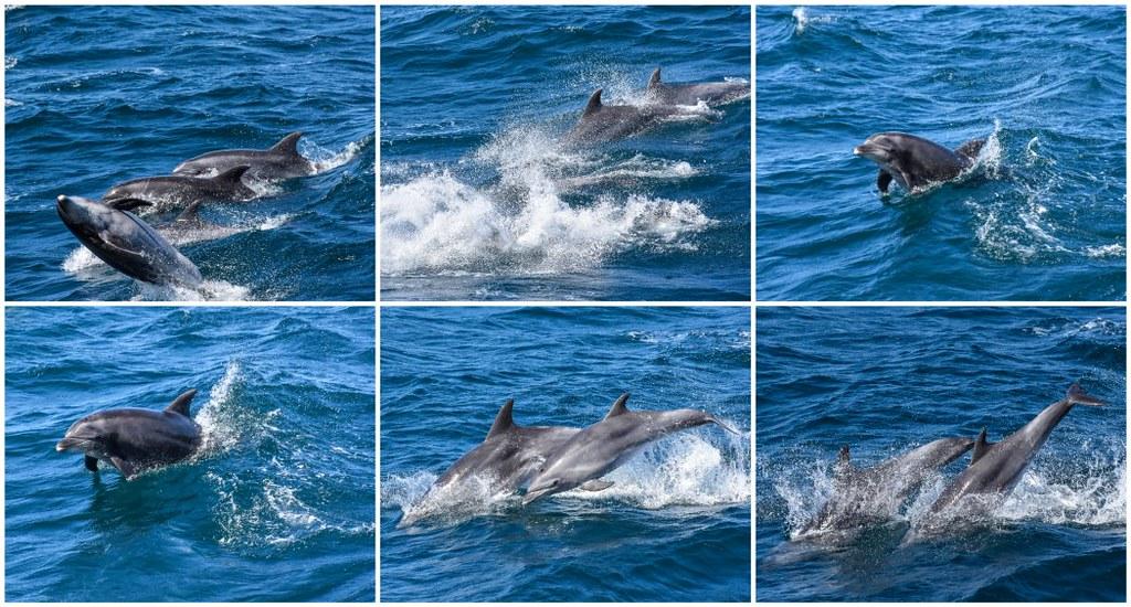 dolphin fun!