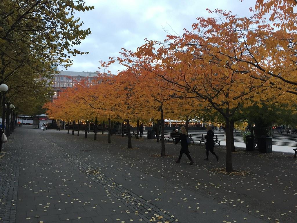 Körsbärsträden i Kungsträdgården i Oktober
