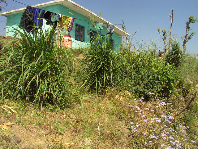 रामजीवाला गाँव में त्रिलोक बिष्ट का घर