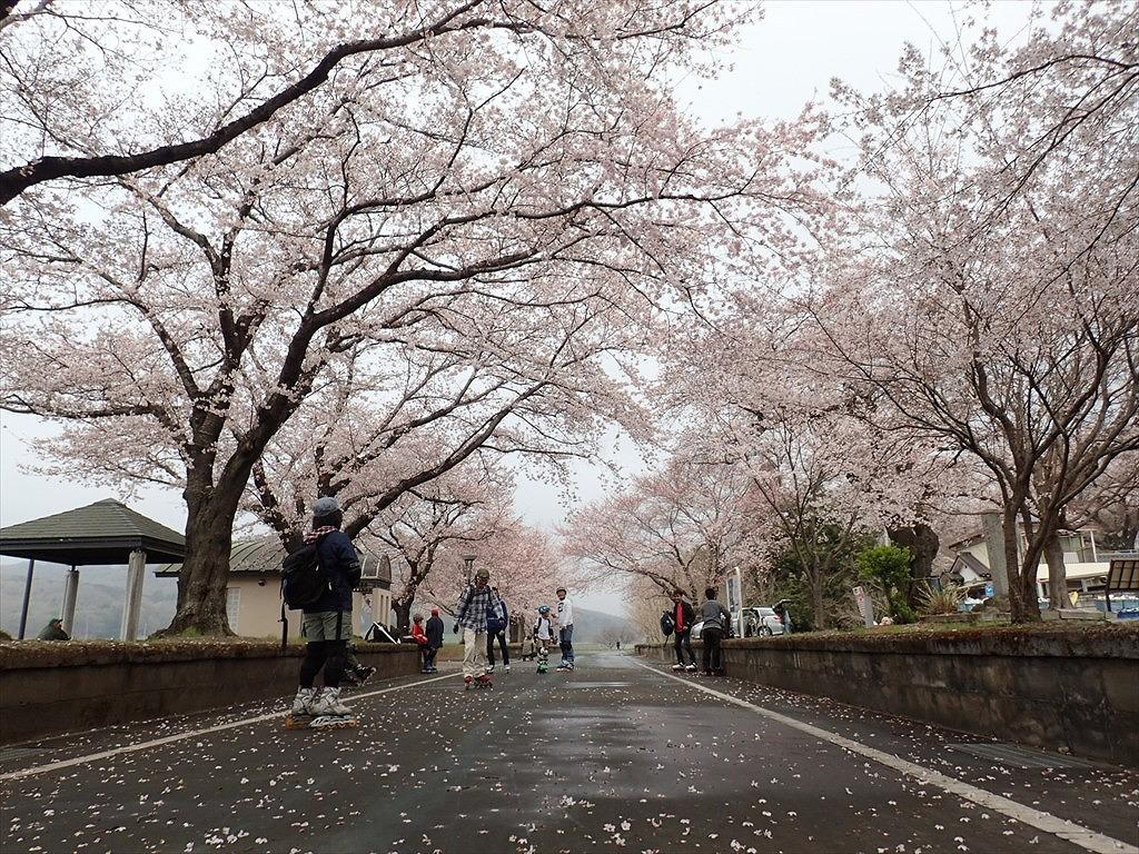 2016春りんりん (4)