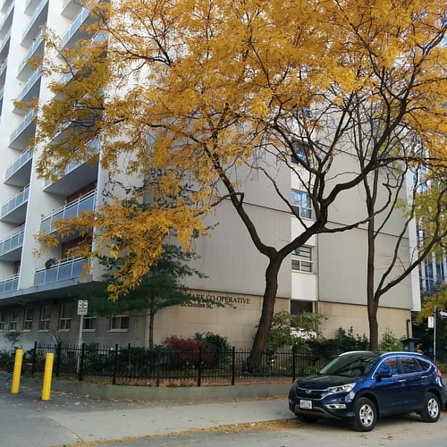 Leaves against concrete #toronto #churchandwellesley #alexanderstreet #fall #autumn #yellow #leaves