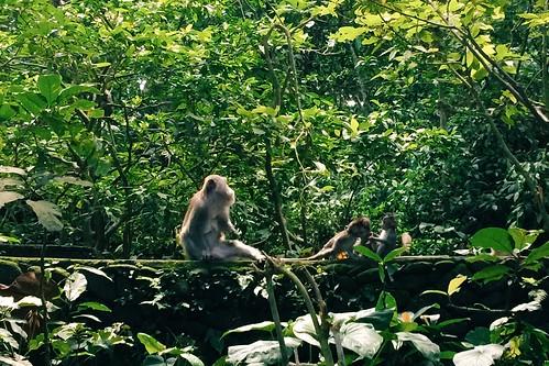 Ubud Monkey Forest 4