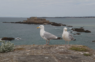 122 Saint Malo Fort National Meeuwen