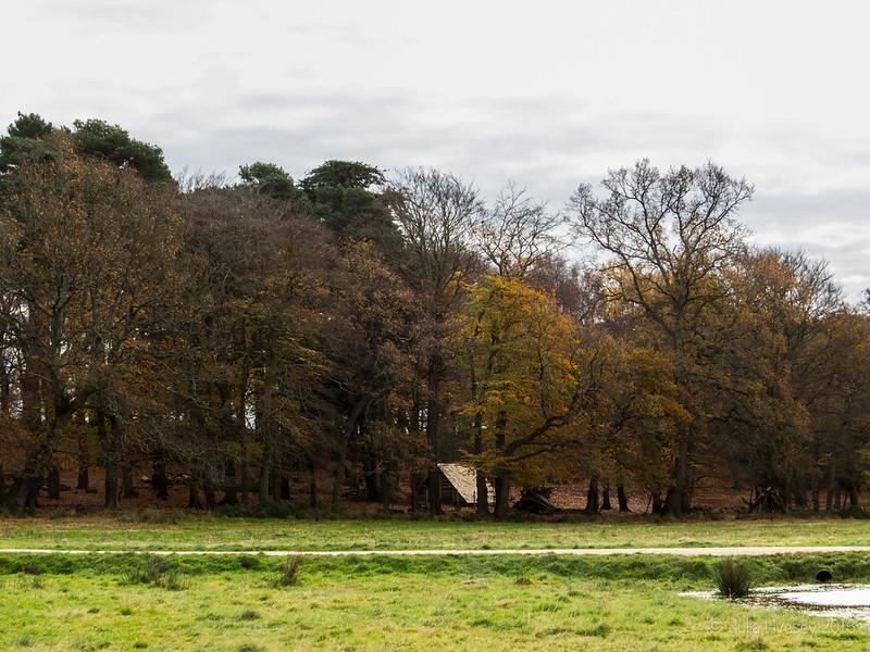 Dark Age Dwelling in the Woodland Walk