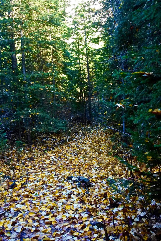 Cabin Lake trail 5