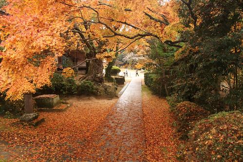 花山院紅葉3