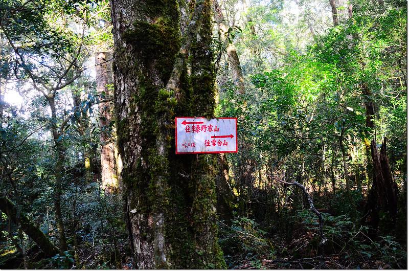 稜線岔路指示牌 1
