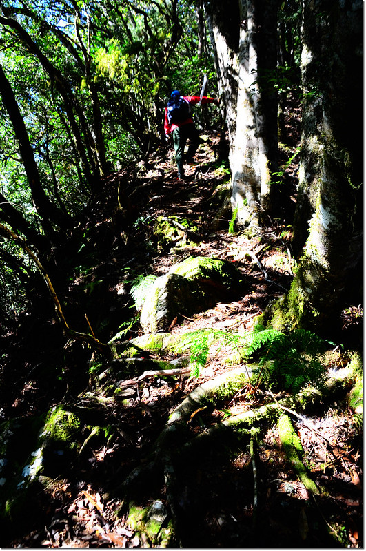 焦土山登山路徑瘦稜路段 2
