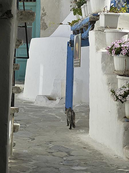 un chat en Grèce