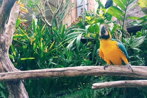 Ubud blanco art museum bird