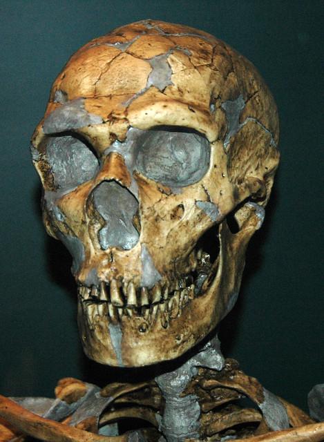 Homo neanderthalensis fossil hominid (Pleistocene; Europe) 1