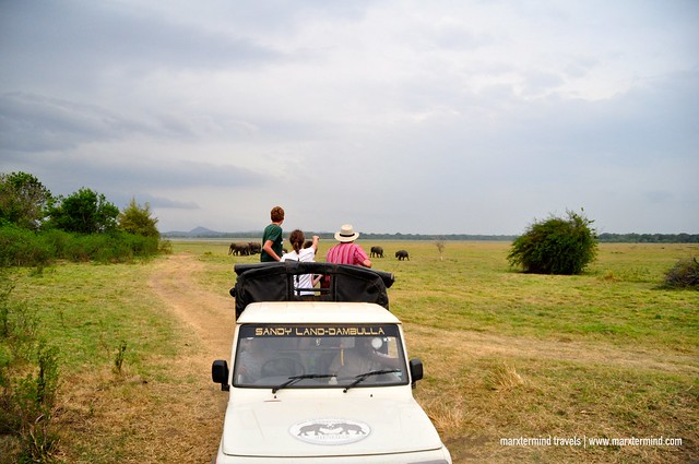 Safari Adventure at Minnneriya National Park