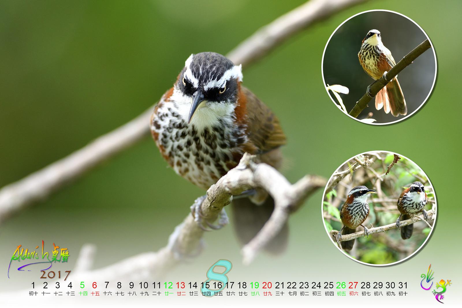 Calendar_03alder_08