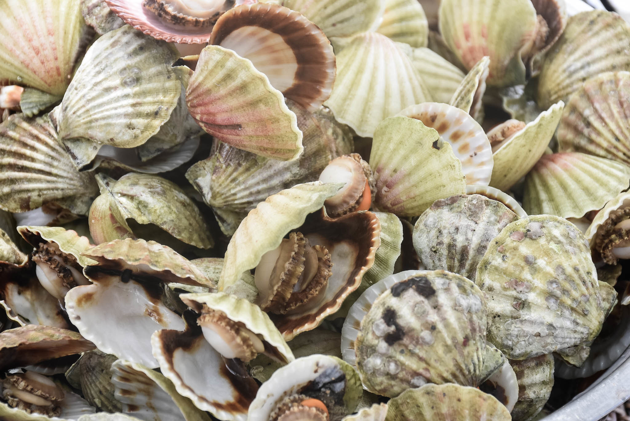 gigantes clams (1 of 1)