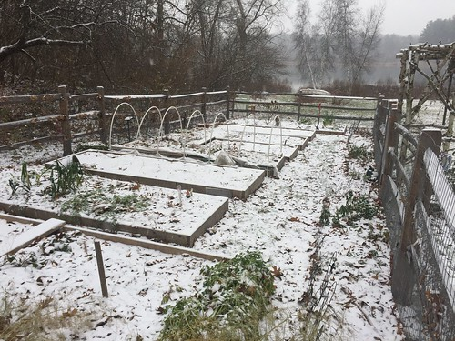 snow on garden IMG_9480