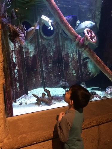 LI Aquarium 2016