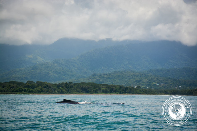 Humpback Whale Watching in Costa Rica National Park