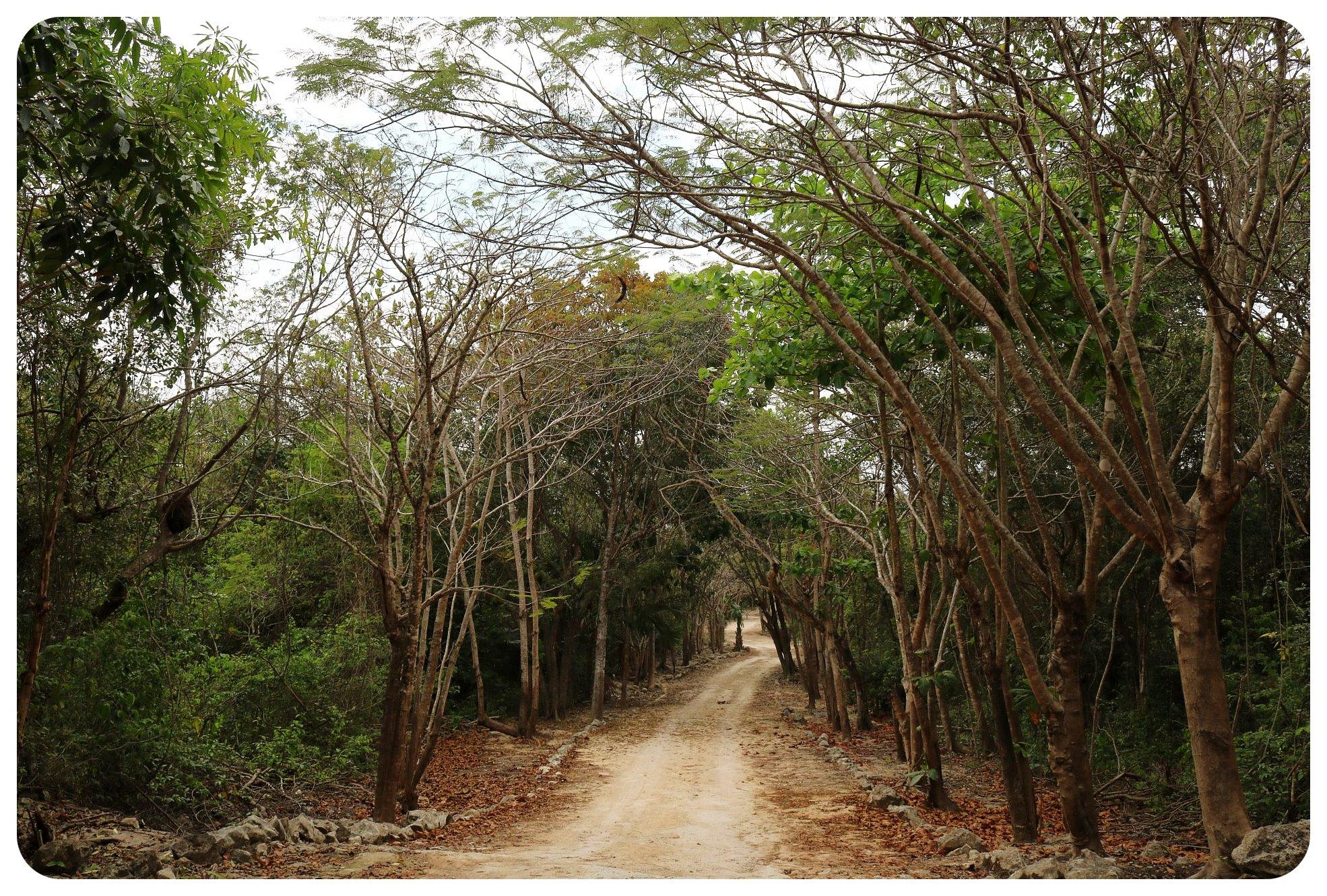 cenote drive