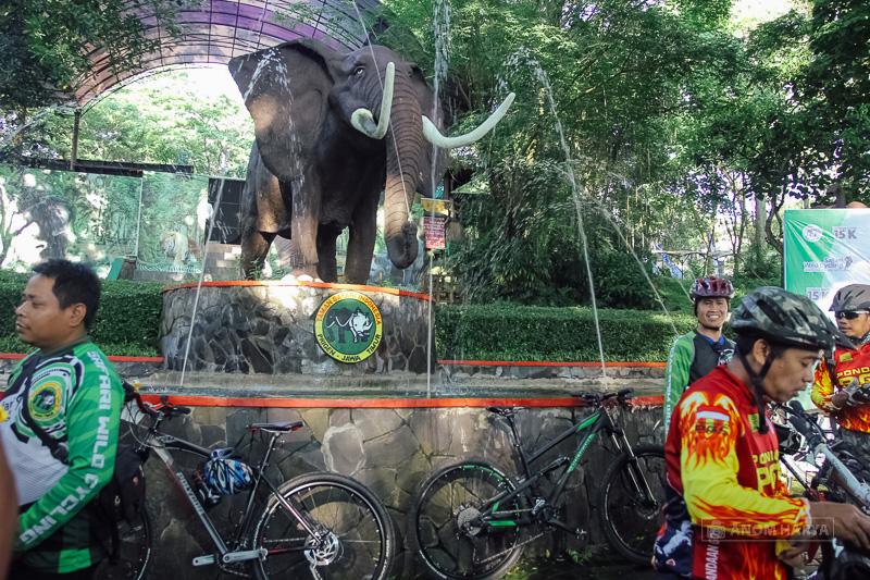 Safari Wild Cycling 2016