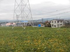 DSCN6333