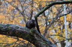 21/30: Fat Squirrel Season