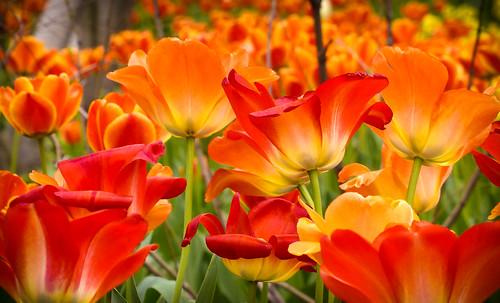 """""""Springtime Splendor"""""""