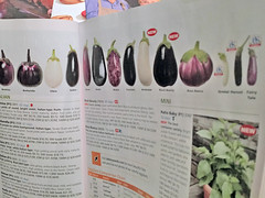 johnny's catalog eggplants IMG_9401