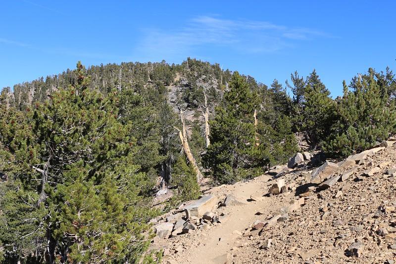 San Bernardino Peak is in front of me as I continue on the San Bernardino Peak Trail