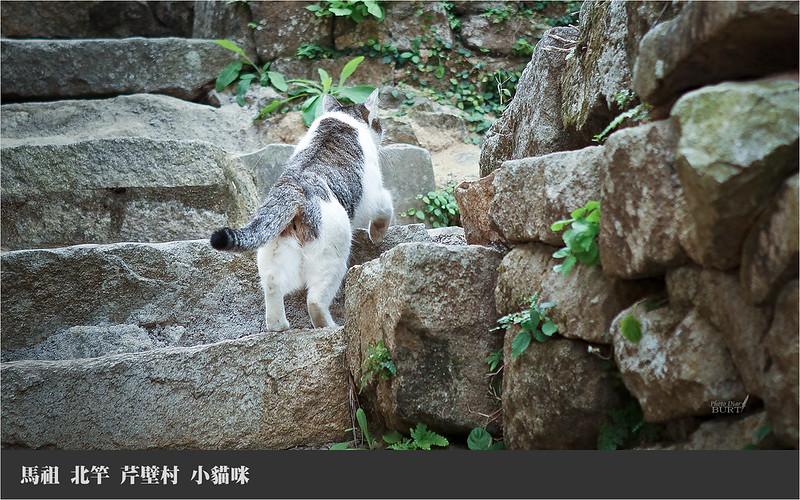 馬祖北竿芹壁村_小貓咪