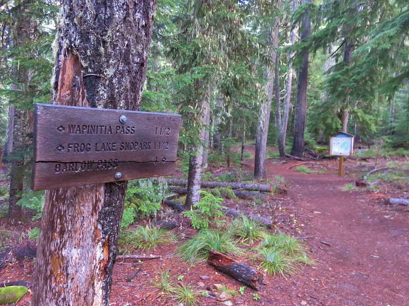 Pacific Crest Trail near the Mt. Hood Wilderness boundary