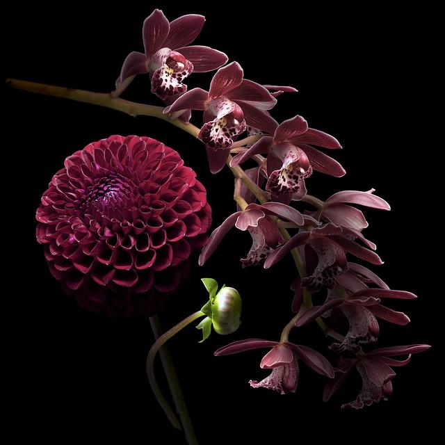 les fleurs du bien p1 a3 admin control flickr. Black Bedroom Furniture Sets. Home Design Ideas