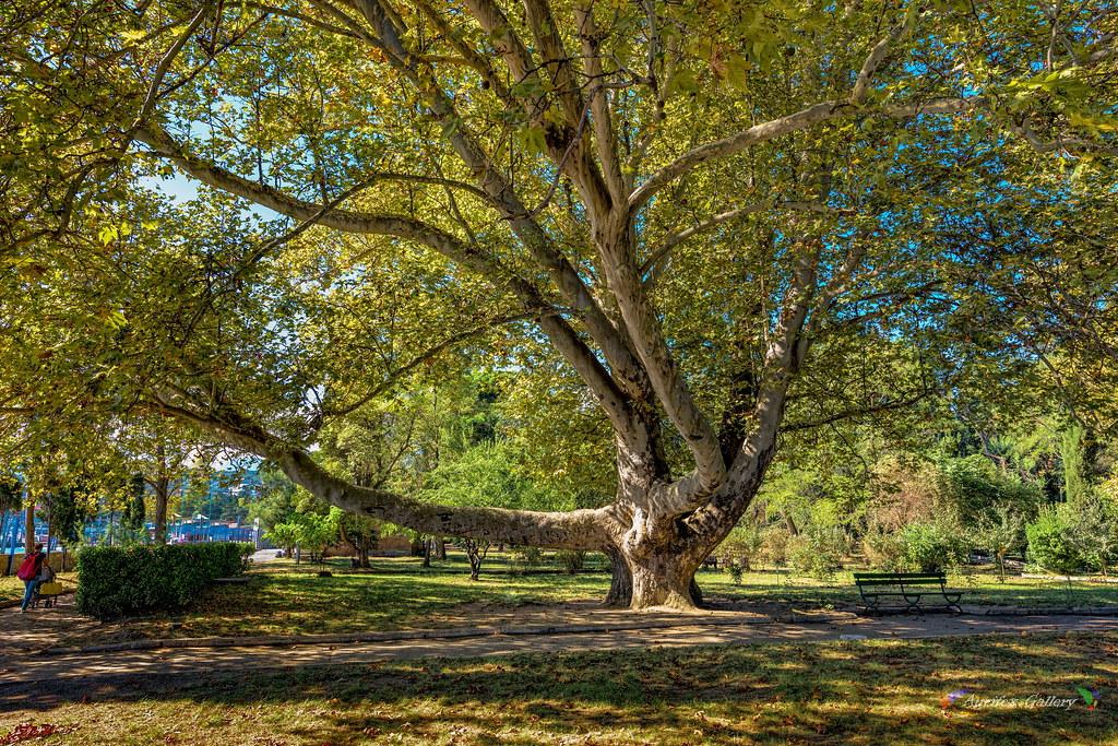 In the Park in October