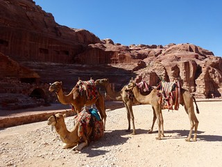 Kamelen in Petra!
