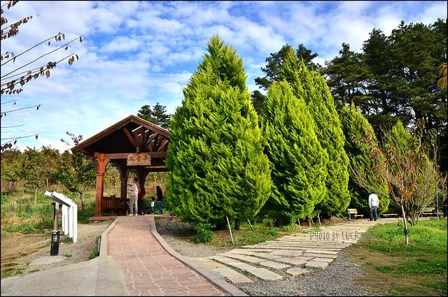 福壽山農場楓葉季015